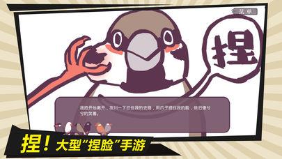 咕啾文鸟恋爱物语手游苹果版v1.0截图2