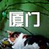 厦门旅游攻略安卓免费手机版下载v1.0