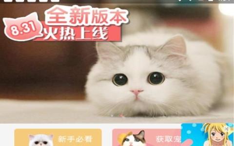 猫咪社区安卓精品版手机软件下载