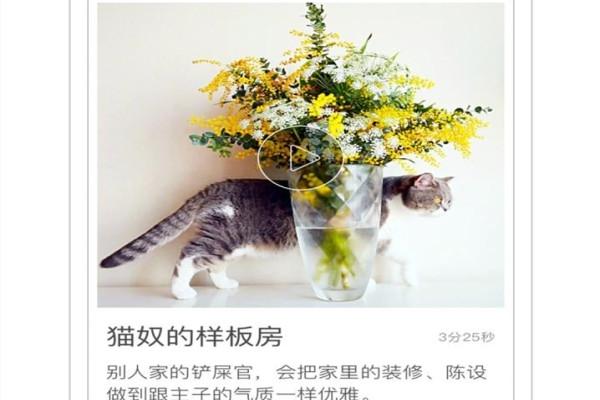 一日猫安卓猫咪社区软件下载