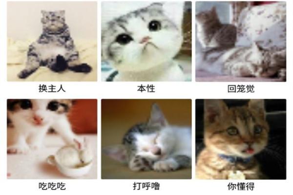 猫语互译软件免费版下载