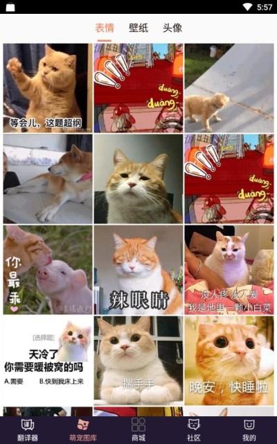 猫语互译软件免费版下载截图2