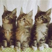 抖音评论小猫点头表情包完整版v1.0