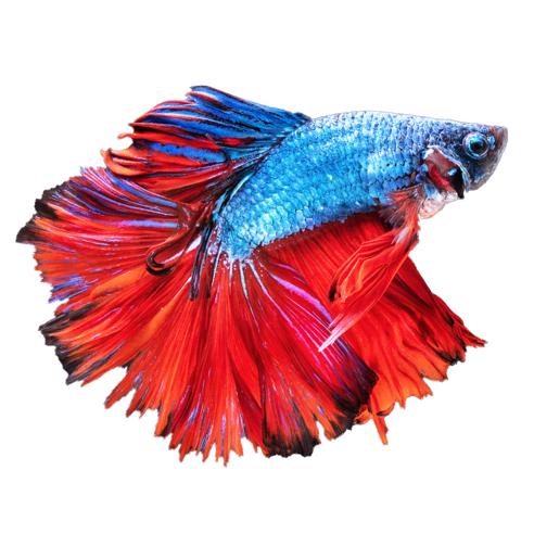 贝塔鱼虚拟水族馆游戏v1.0